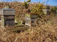 We put hives together in pairs on a timber and block stand.